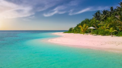 beach-coast-coconut-trees-221471